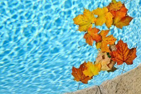 Leaves on the pool - EWR Digital